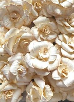 seasonsofwinterberry:  Gorgeous paper roses….