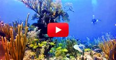 See the Beautiful Waters of Grand Cayman! | The Rainforest Site Blog