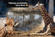 Giraffe, Animals, Animales, Animaux, Giraffes, Animais, Animal