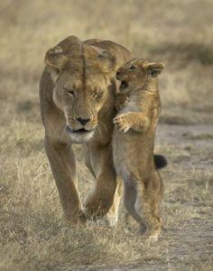 Momma! Listen!