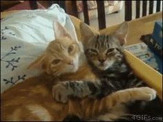 This is possibly the cutest thing that i've seen - GIF on Imgur