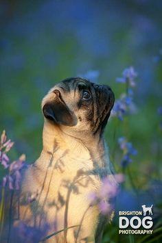 Brighton Dog Photography - Effy...