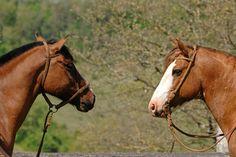 Resultado de imágenes de Google para http://www.elgalope.com/fotos-de-caballos/galerias/criollo-argentino/1.jpg