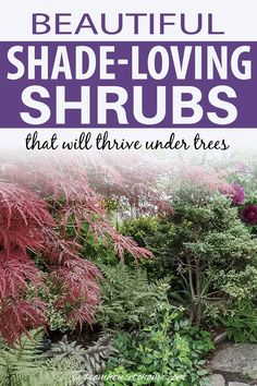 Find out which bushes to plant under trees in the shade garden in your backyard or front yard. These shrubs will help to brighten up your yard. #fromhousetohome #bushes #shade #gardeningtips #gardening #gardenideas Shade Loving Shrubs, Shade Shrubs, Shade Perennials, Shade Trees, Shade Plants Container, Shade Garden Plants, Summer Plants, Garden Shrubs, Evergreen Bush