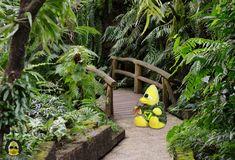 Ich weiß gar nicht, was die immer alle mit den #Schaben haben. Ich mag die irgendwie gerne... #ibes #ibes2019  #bigb #bigbird #cooler #gelber #erpel #enterich #vogel #gelbe #ente #schrader #beckum #yellow #duck #bird #plüschi #plushie #plüschtier #kuscheltier #stofftier #schmusetier #fotografier_dein_kuscheltier Garden Bridge, Outdoor Structures, Plants, Bird, Plant, Planting, Planets