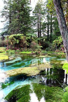 Rotorua NZ | Rotorua things to do; Maori culture & thermal activity