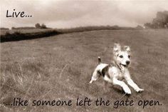 Live like someone left the gate open. Love it!