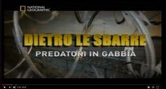 [National Geographic] Dietro le Sbarre - Predatori in gabbia