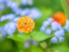 Orange blue by Dominique Toussaint on Wildlife, Orange, Nature, Plants, Blue, Beautiful, Naturaleza, Plant, Nature Illustration