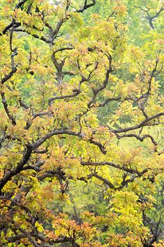 Tree Detail, Kanha National Park by Panoramic Images
