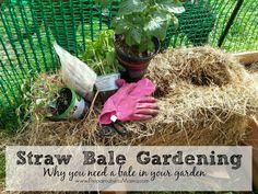 Why you need a straw bale in your garden: Straw Bale Gardening 101 | PreparednessMama