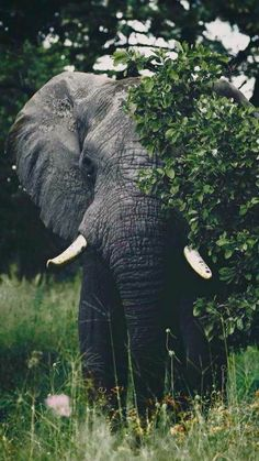Even beautiful creatures can be shy at times. ~ETS : Even beautiful creatures can be shy at times. Elephant Photography, Animal Photography, Nature Photography, Canon Photography, Photography Backdrops, Photography Studios, Photography Lighting, Vintage Photography, Wedding Photography
