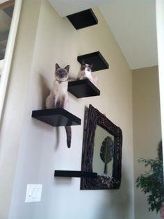My Cat Climbing Wall - With Ikea Lack Shelf