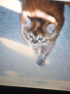 Katzen Baby ❤️