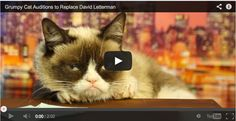 Grumpy Cat Auditions to Replace David Letterman