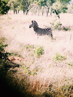 Shambala Game Reserve, South Africa