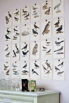 My husband made a special backdrop wall using bird photos from a book like these!