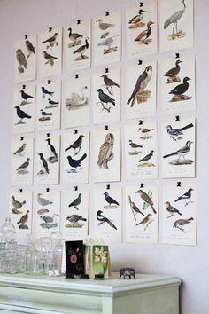 wall of birds