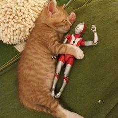 #Cute Ginger cat #Ultraman