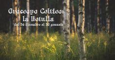 Oroscopo Celtico | la Betulla