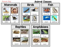 Animal Classification Sort - Mammals, Birds, Fish, Reptiles, and Amphibians(With Real Pictures)Looking for a hand-on interactive printable. Then look no further!This sort focuses on mammals, birds, fish, reptiles, and amphibians.Students will cut, sort, and glue the images under the correct class.Al...