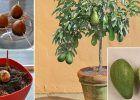 Se você gosta decultivar e fazer jardinagem, então vai adorar essa dica. Toda a gente sabe que os abacates, para além de serem deliciosos, são ótimos para a saúde. Essa fruta verde estácheia depotássio e vitaminas, tais como a B5, B6, C, KeE. Para além disso, ela tem gorduras saudáveis para o coração e muita … Continued