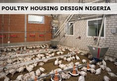 A modern poultry house.In summaryThe million technology dubbed Environmentally Controlled House offers optimum environment for light, temperature and humidity for thousands of young birdsWhen you first step into the Nereus Poultry farm,. Poultry Cage, Poultry House, Poultry Farming, Starting A Coffee Shop, Fencing Material, Chicken Cages, Water Management, Shed Homes, Central Heating