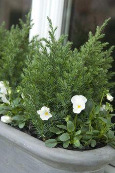 Miniconiferen zorgen voor wintergroene bloembak