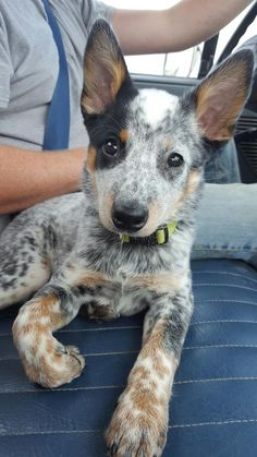 Meet Jodi Hope you're doing well.From your friends at phoenix dog in home dog…