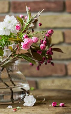 spring | Flickr: Intercambio de fotos