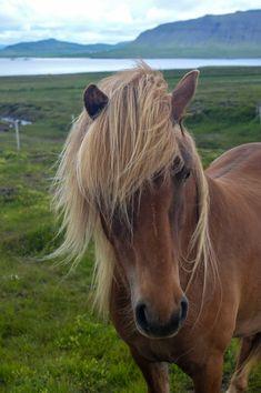 Horses are a beautif