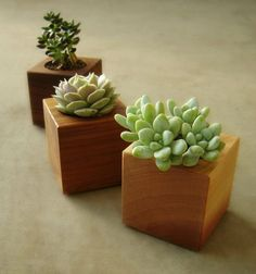 Add a touch of nature to your room with these succulent planters!