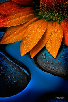 This picture refers to the element of color. You can see two complementary colors here: orange and blue. Colour Schemes, Color Combos, Blue Orange, Orange Color, Orange Crush, Image Bleu, Orange Sunflowers, Powerful Images, Color Harmony