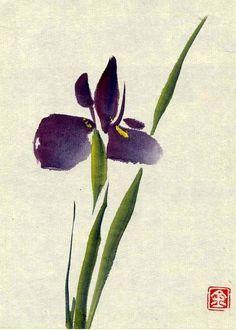 iris01.jpg 428×600 pixels