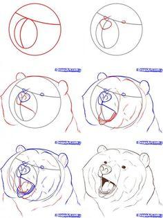 lazy bear drawing - Google Search