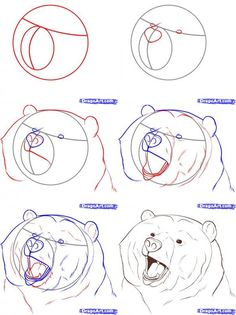 lazy bear drawing - Google Search