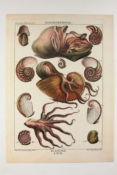 Zoomorphose: Marine Sea Life Illustrations. A reproduction first published in 1780. Written in French and printed in England