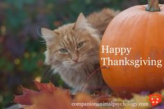 A cat, a pumpkin and some autumn leaves to wish you Happy Thanksgiving