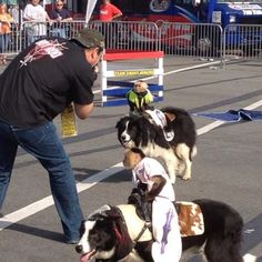 Monkeys riding dogs. AutoFair was a hoot!