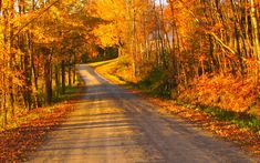 country road in Vermont dressed up for Fall