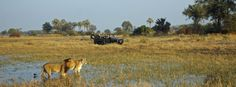 #Botswana_Safari holds endless surprising moments for you that will make you feel your #goosebumps during the #trip.