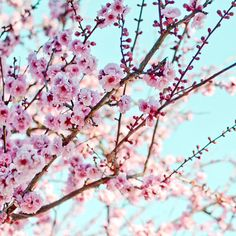 Love these colours Aqua/teal background and pink blossom