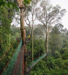 Borneo Rainforest Southeast Asia | Geoff Reid NZ