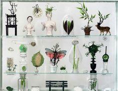 Idée Déco 3 : Les cabinets de curiosités - Déco en nuances