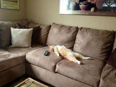 Você provavelmente nunca viu seres tão dramáticos como esses gatinhos!