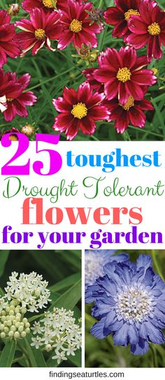24 Best Drought Tolerant Plants That Grow In Lack Of Water | Best of Zone Perennial Garden Design Html on shade gardening zone 3, landscaping zone 3, roses zone 3,