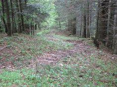 Bauch Beine Po Training in Annaberg-Lungötz Logs, Plants, Bavaria Germany, Mother Nature, Flora, Plant, Planting, Journals