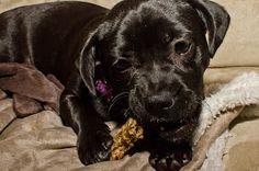 Homemade Doggie Treats with Peanut Butter,  Banana + Parsley