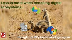 Less is more when choosing digital ecosystems!