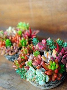 Succulents look pretty and are not too much work Succulent Gardening, Succulent Terrarium, Planting Succulents, Container Gardening, Planting Flowers, Air Plants, Cactus Plants, Garden Plants, Indoor Plants